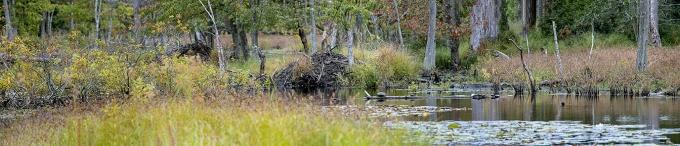 DM Beaver Lodges_v2_pano_7img_150mm_9_24_19