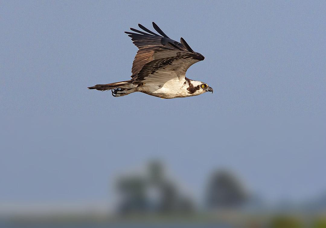 Osprey v2_MA_9265