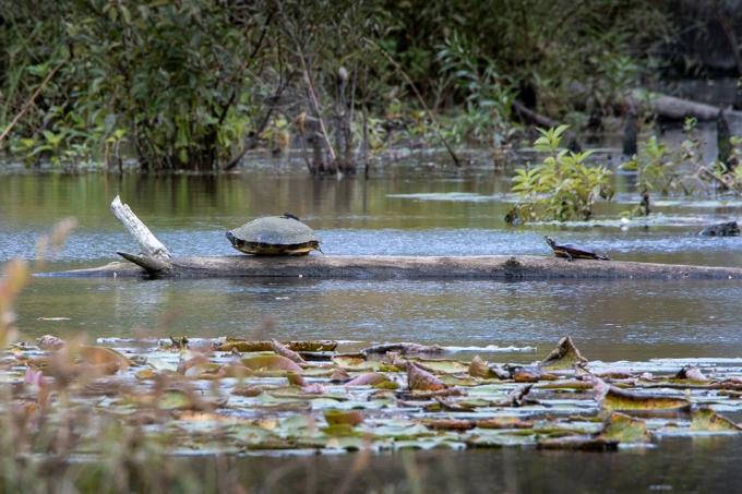 Turtle_Guardians_v2_DM_9_19_76A8196