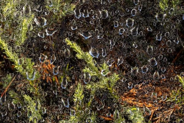 Raindrops_v1_76A0497