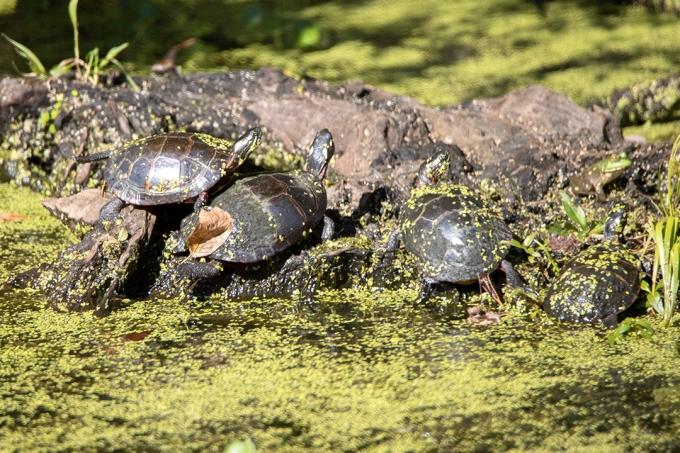 Turtles_BH_Finis_Pool_v1_600mm_76A0352