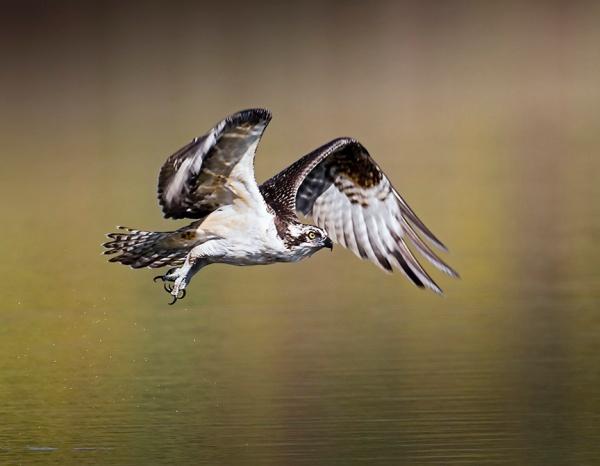 osprey 1test