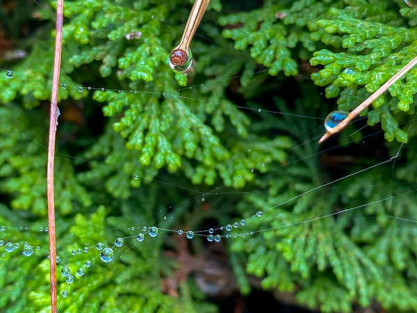 RainDrops_v1_IP11_4_3mm_52mmFF_IMG_0859