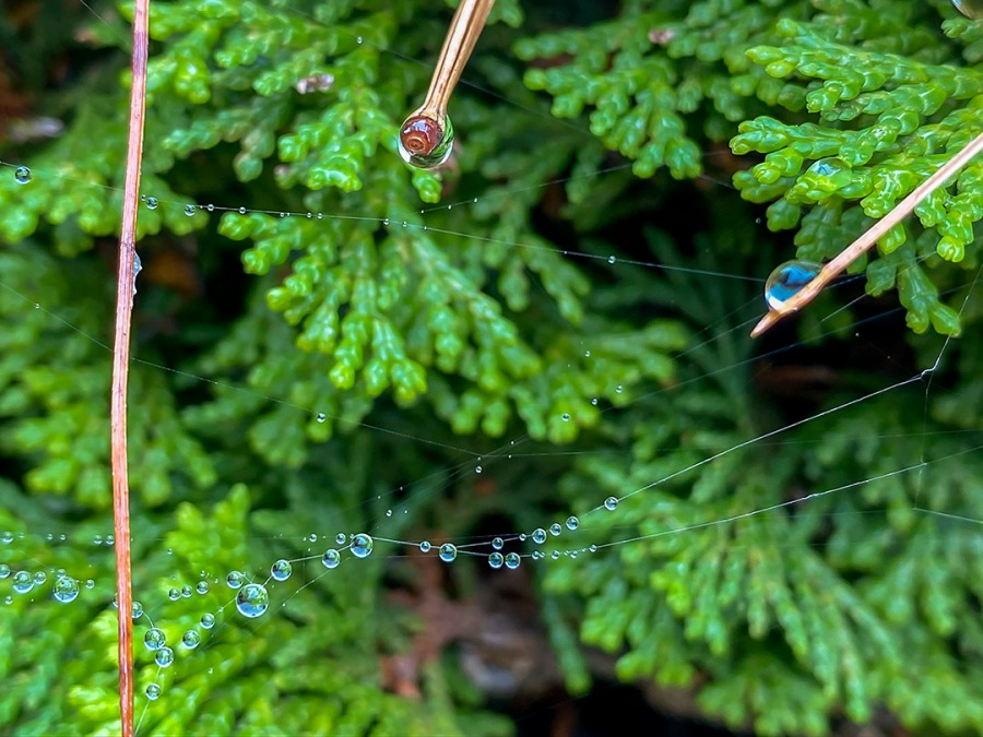 RainDrops_v1_IP11_4_3mm_52mmFF_IMG_0859