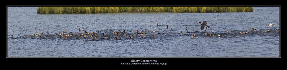 Comorants 90 vf new 7_43G3856 copy