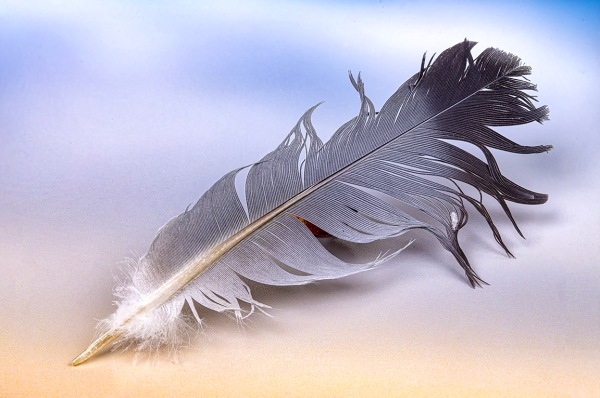 Feather 10- 3img stk_100mm f16