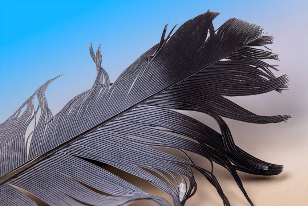 Feather_2img Pano f16 100mm_v2