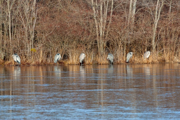 GBH Pano 1 img example_80I2680