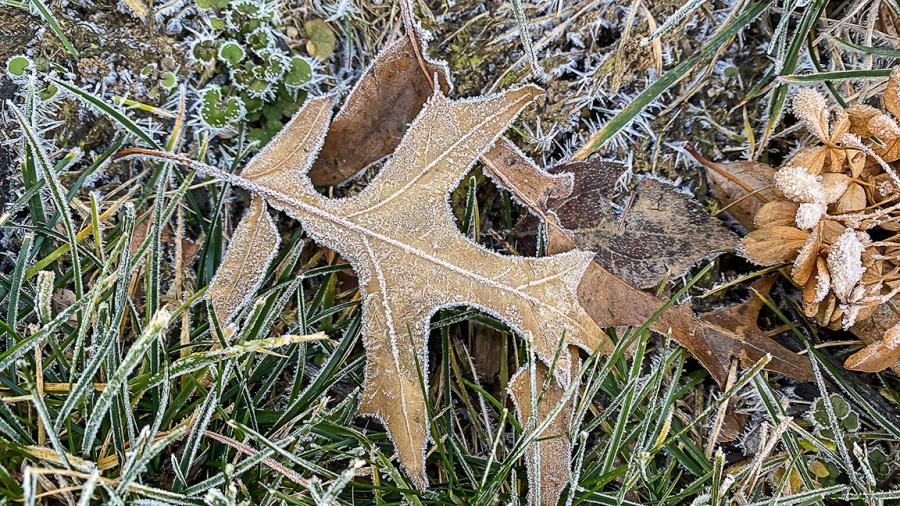 Hoar_Frost_leaf_v1_IP11_Pro_4_3mm_16x9IMG_1283