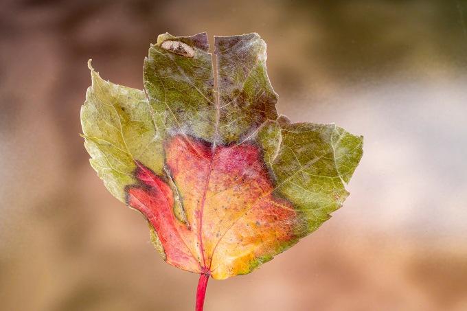 Macro test leaf_v1_76A1506