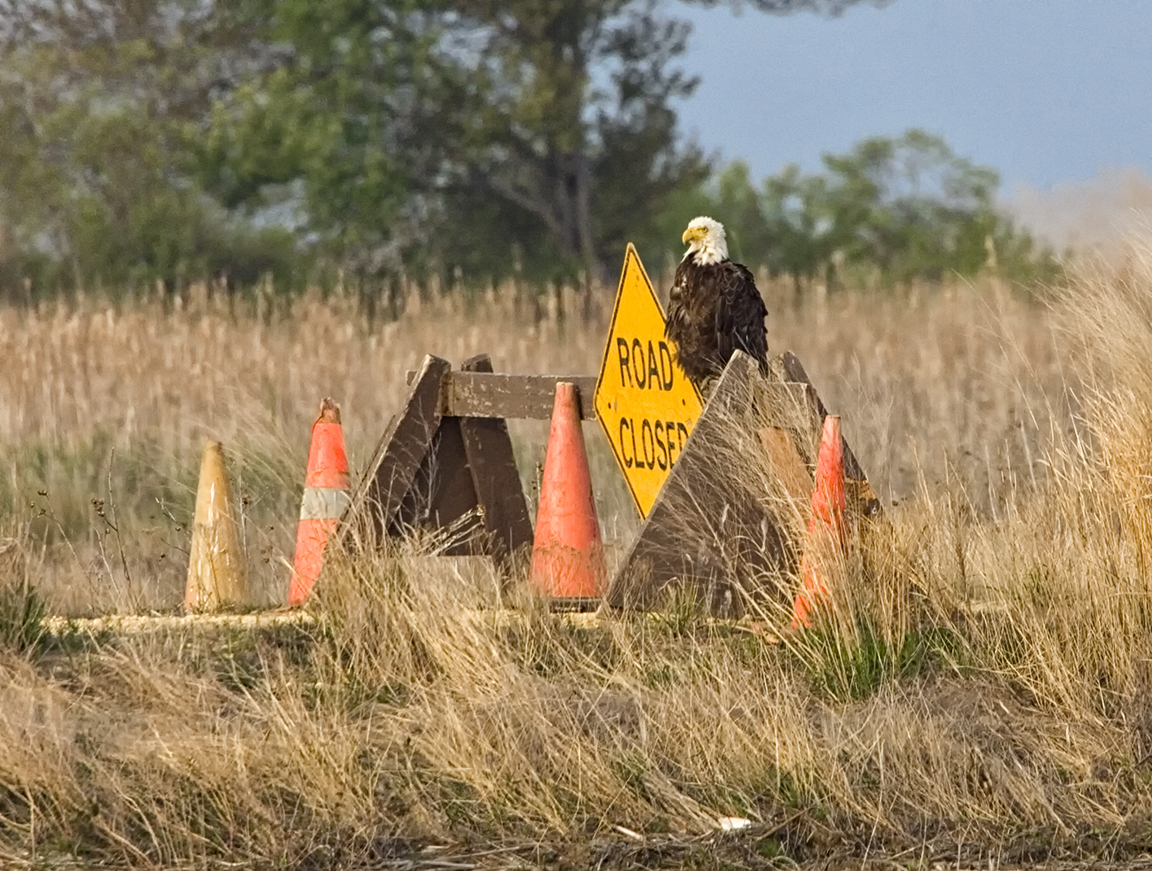 Eagle_Road_closed_v2_Y9F0569a