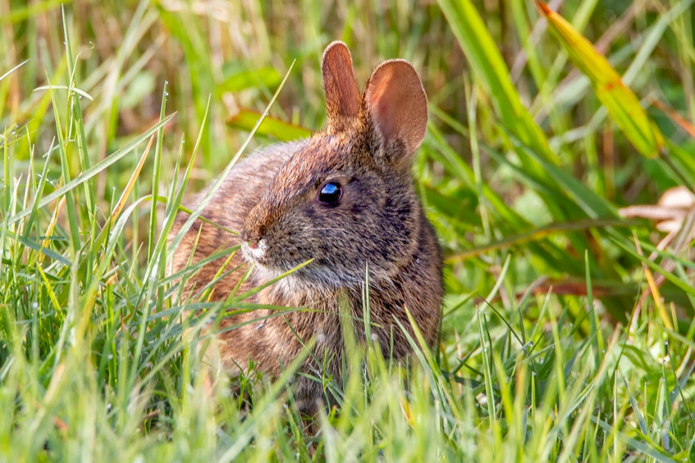Rabbit_LW_v1_MG_0018