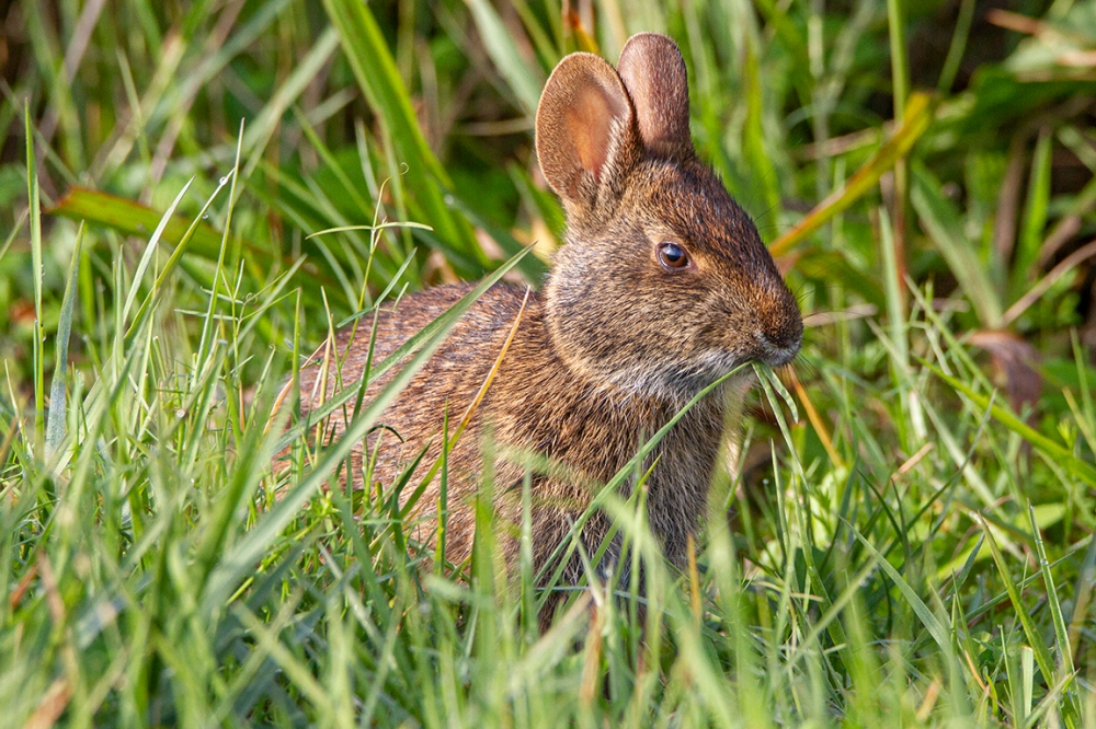 Rabbit_v1_LW_1_20_7D_300mm_MG_0042