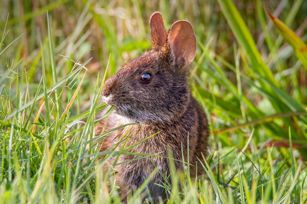 Rabbit_v1LW_7D_300mm_MG_0029
