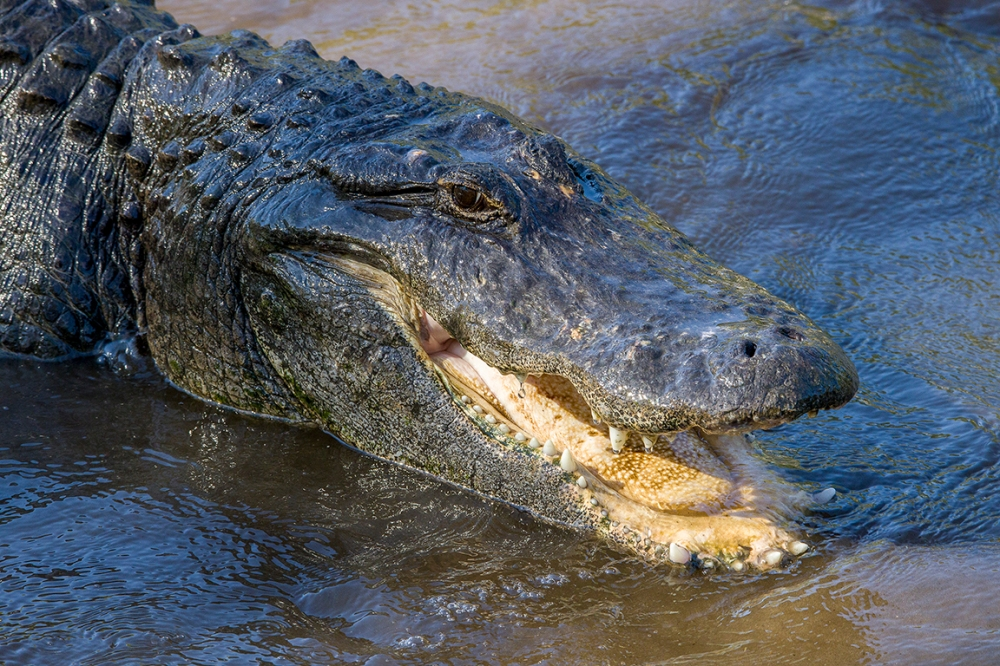 3_Alligators_protectors_v1_AF_4_19_400mm_076A9593