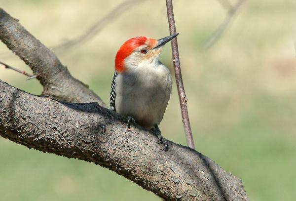 Woodpecker_v2_DSCF3965