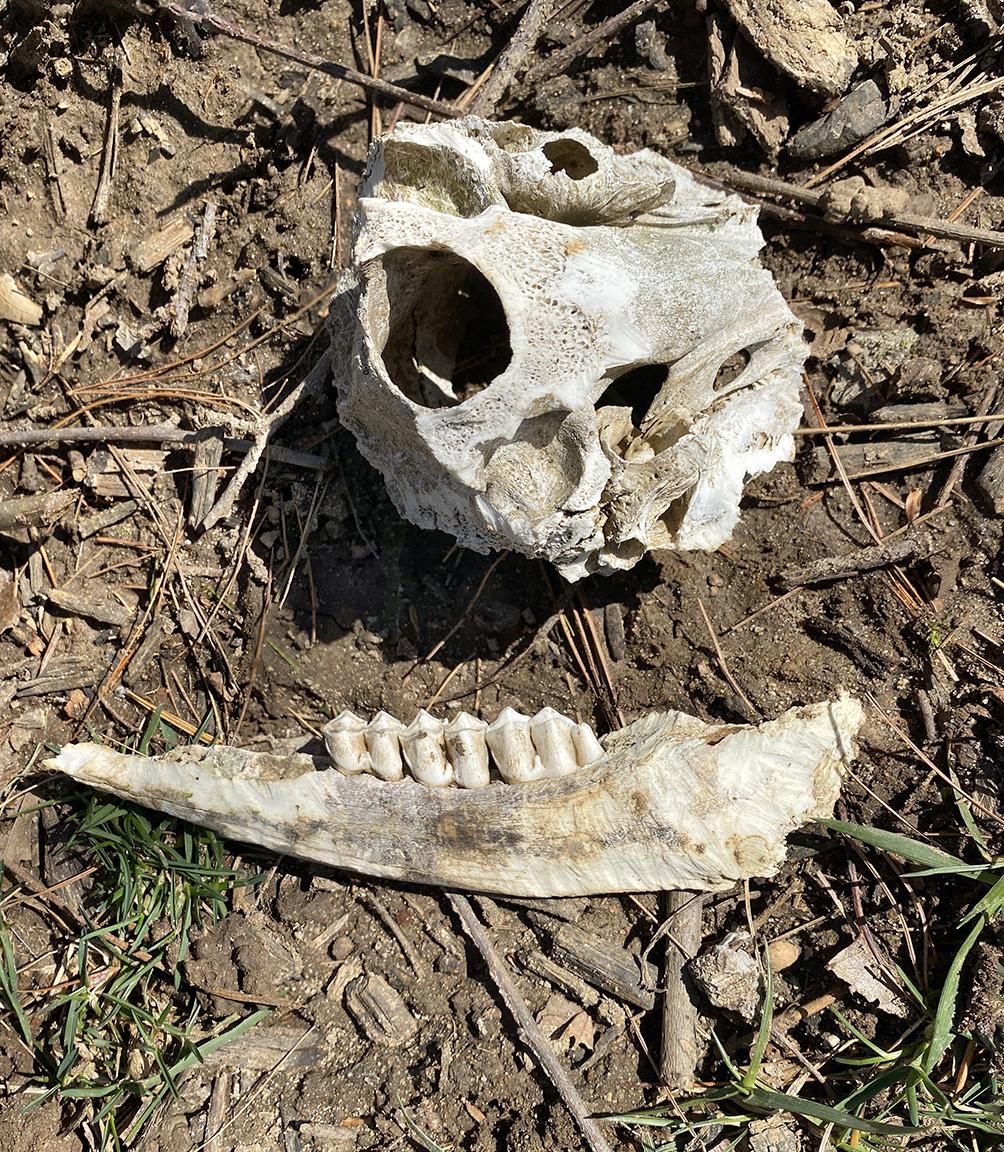 2_img Bones_yard_v3_IMG_1924