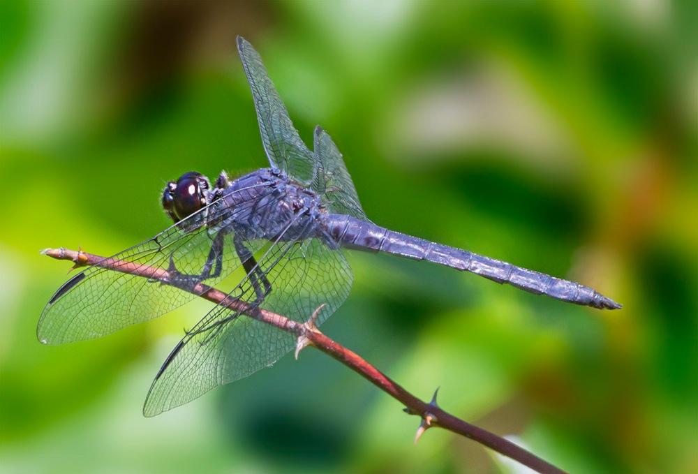 Dragonfly 2 img stk_v5