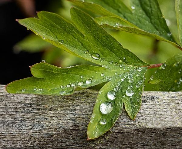 RainDrops 12img_D_f8_12img_Stk_v5