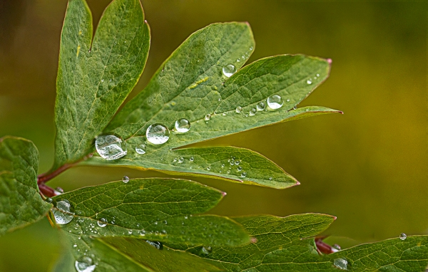RainDrops 9img D-18_9img Stk_v3a