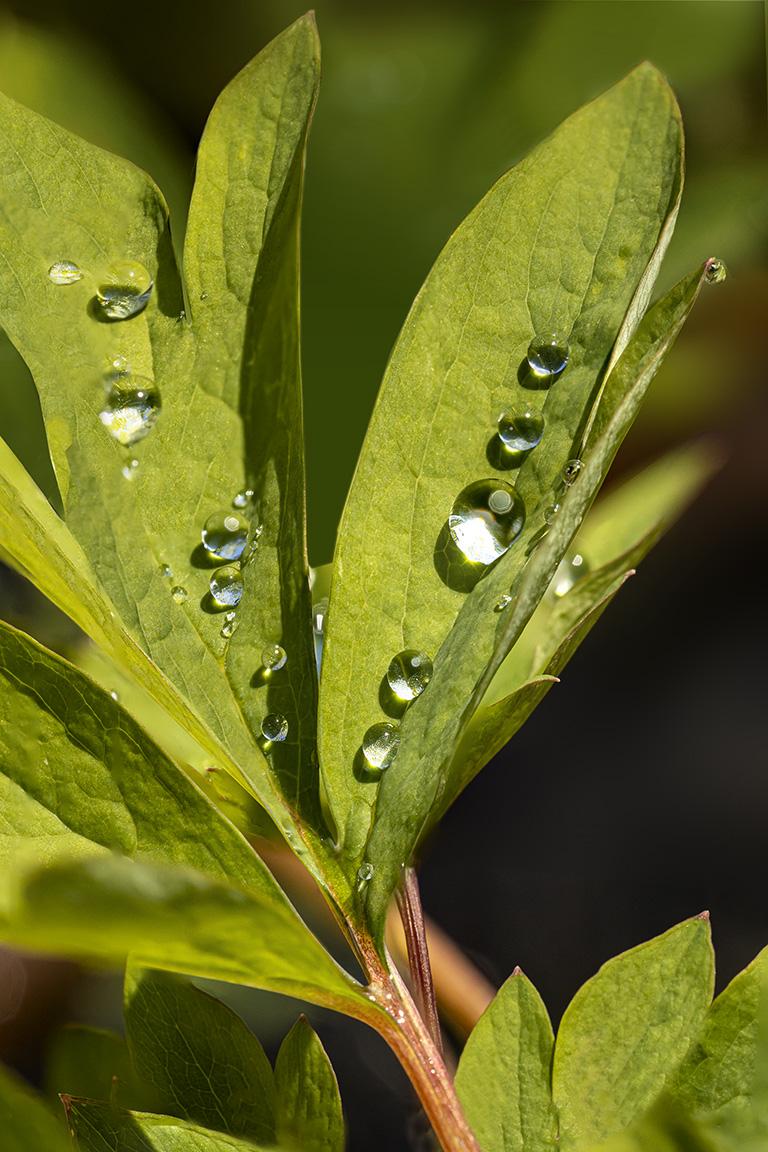 RainDrops v2_150mm _7img pano f8_800ISO