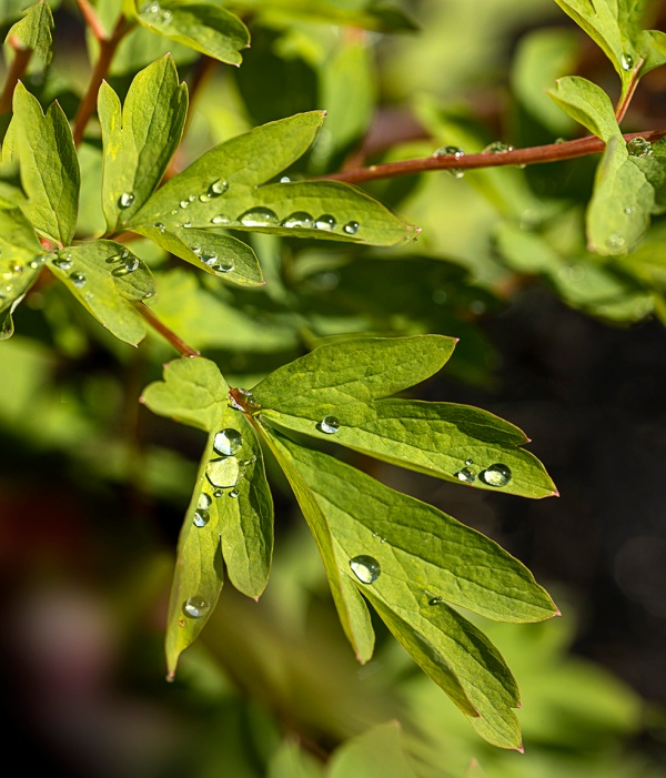 RainDrops_18img f_8_v2_150mm stack