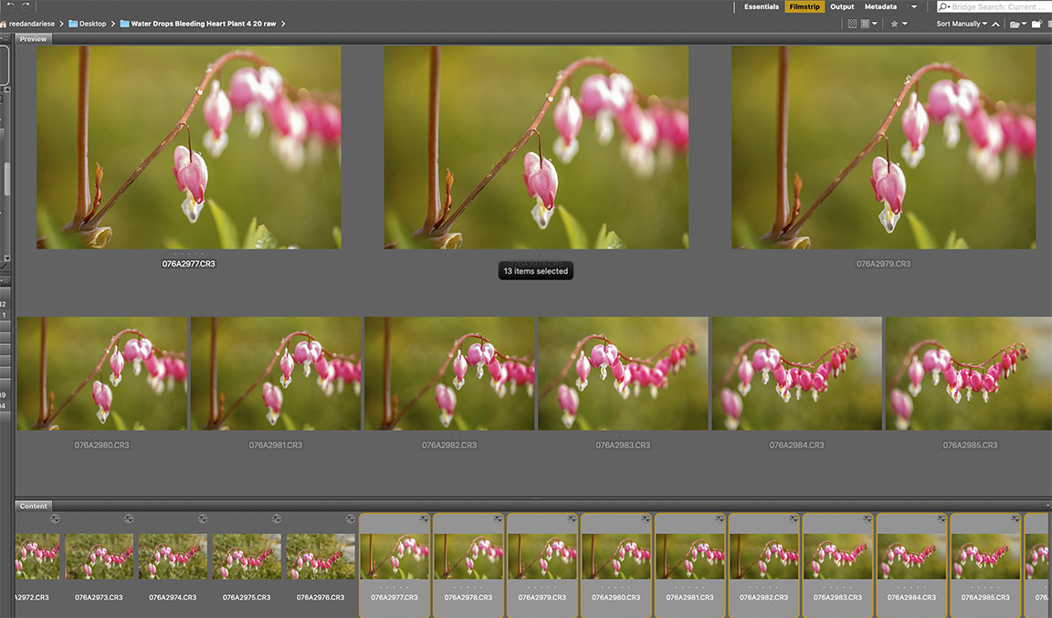 Screen Shot 2020-05-06 at 4.41.50 PM
