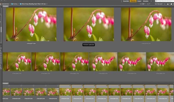 Screen Shot 2020-05-06 at 4.41.50 PM