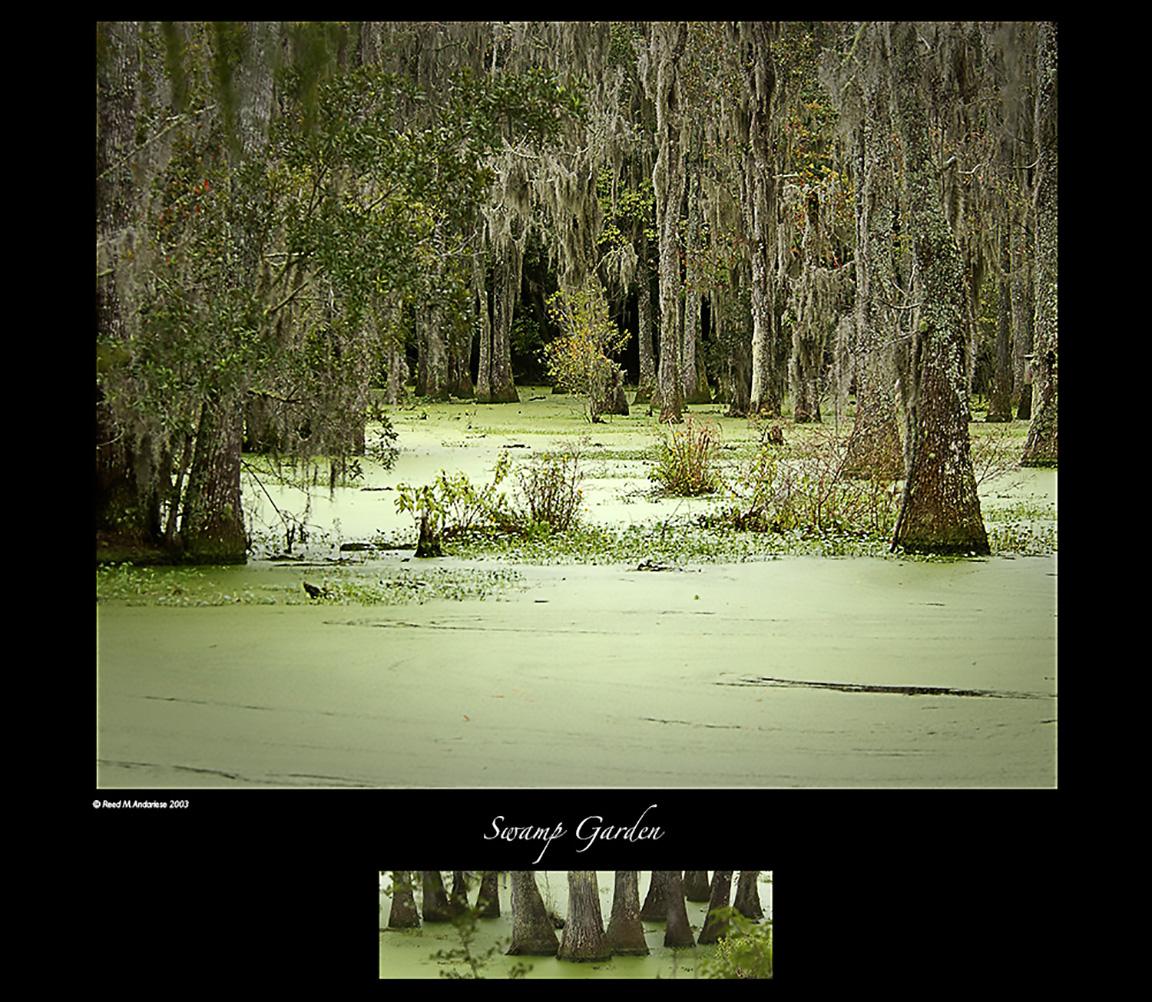 audobon Swamp Garden 002
