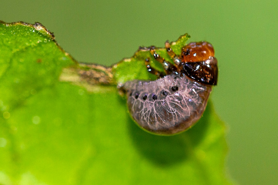 Bug_v2_150mm_1_4X_Fil_Flsh_7d_MG_9047