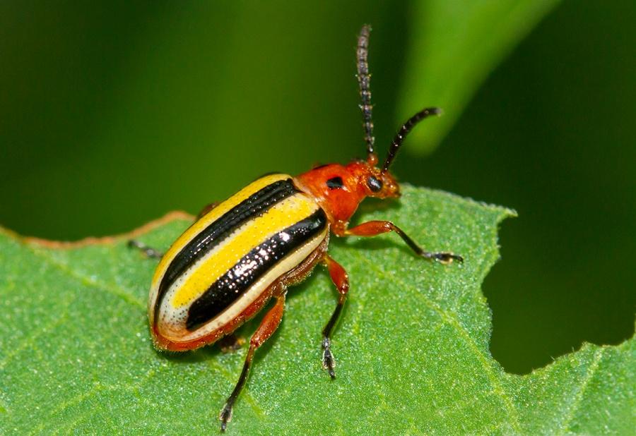 Bug_Yard_v2B_150mm1_4x_7D_f11_FilFlash_MG_9077