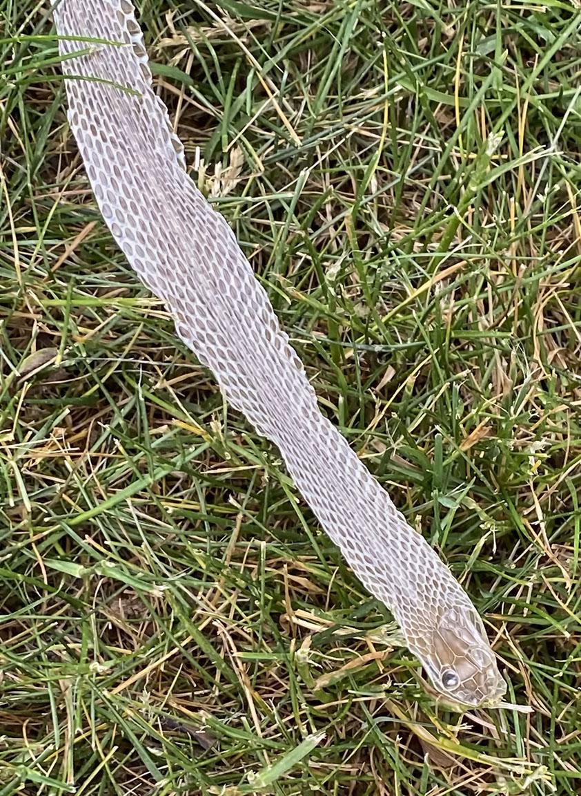 Snake_Skin_2870